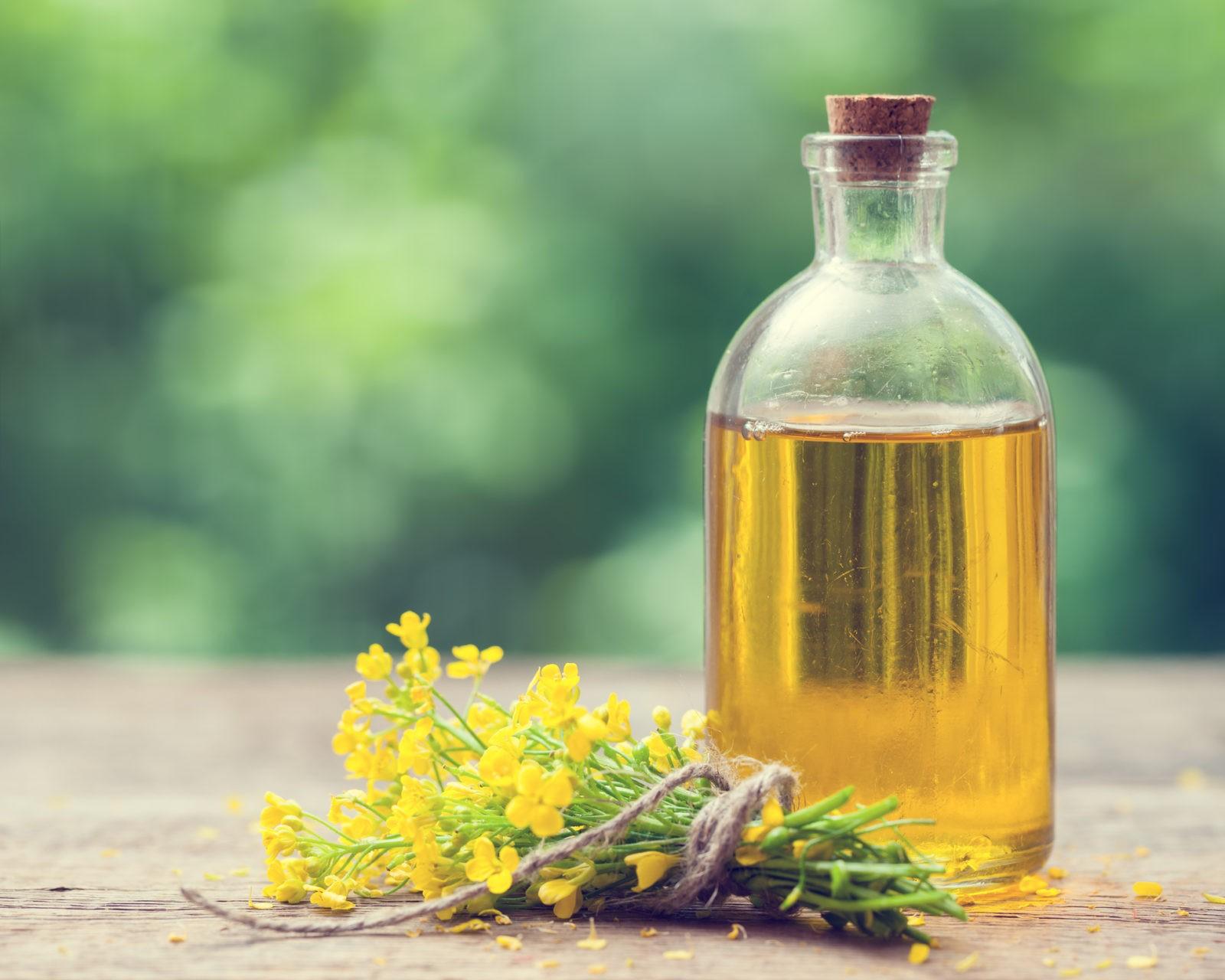 Исследование: масло канола способствует развитию ожирения ислабоумия
