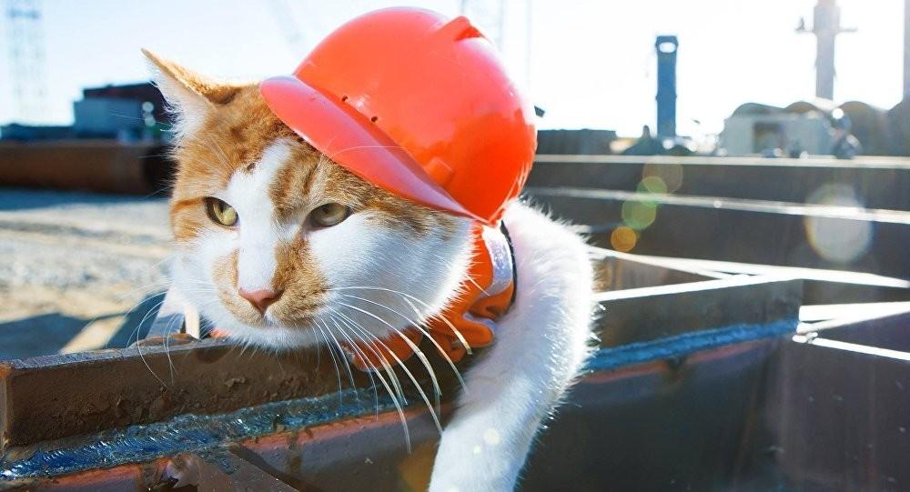 Первым поКерченскому мосту после соединения пролетов пройдет кот Мостик