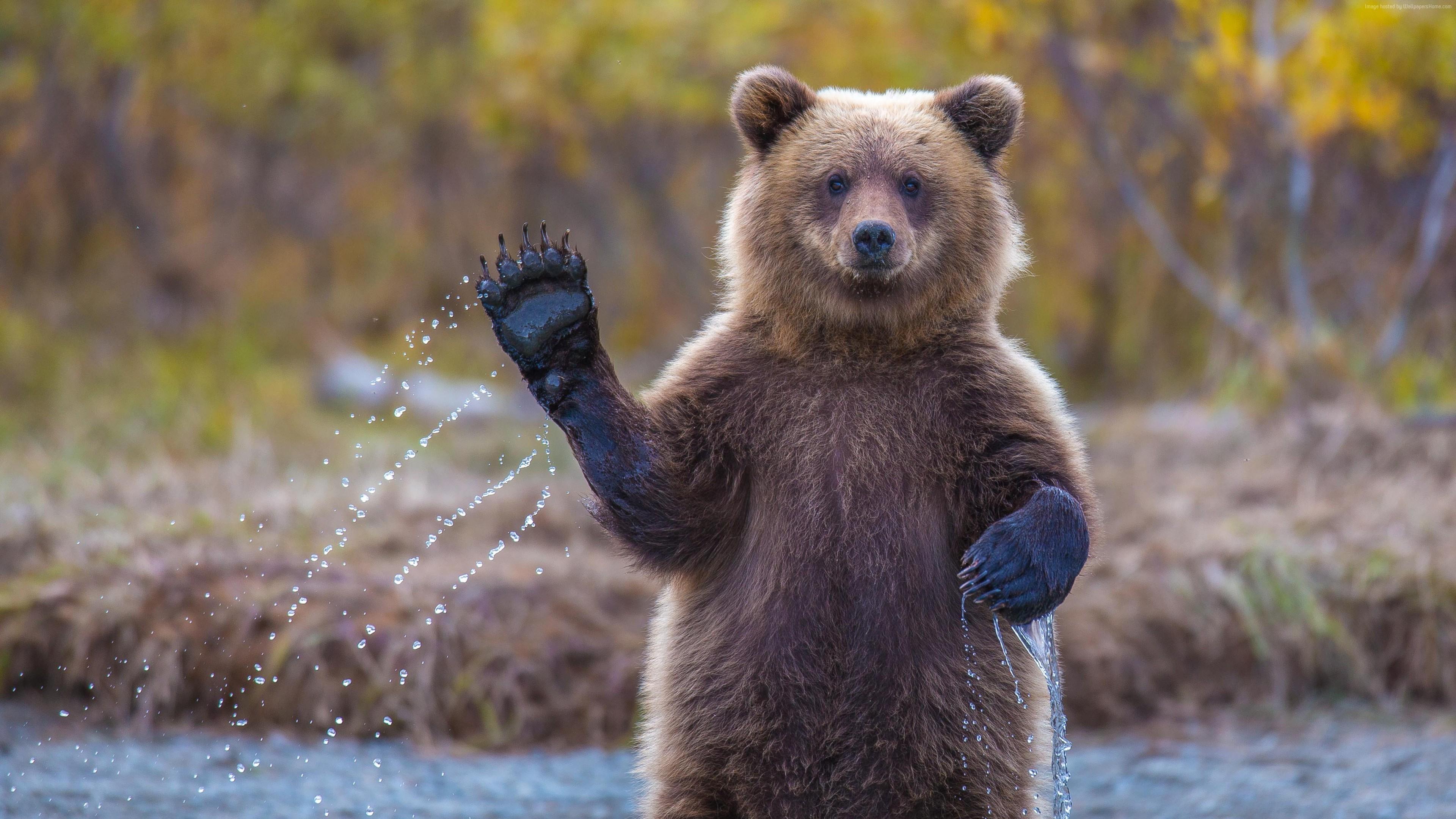 Древнейшие медведи-сладкоежки мучились откариеса миллионы лет назад