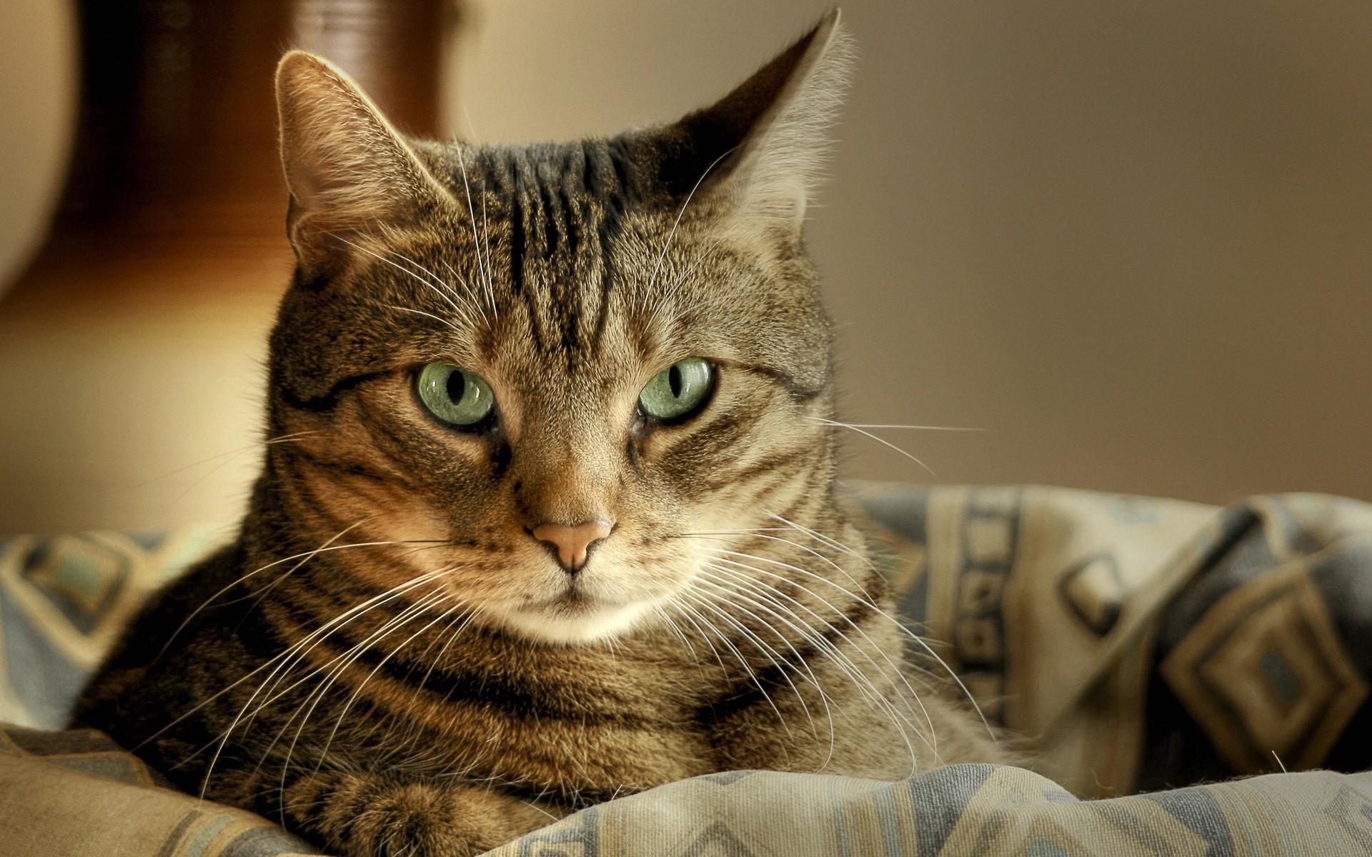 Приют «Матроскин» вПерми снял ролик ожеланиях котов наНовый год