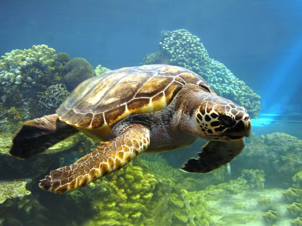 Моряки спасли застрявшую в800 килограммах кокаина черепаху