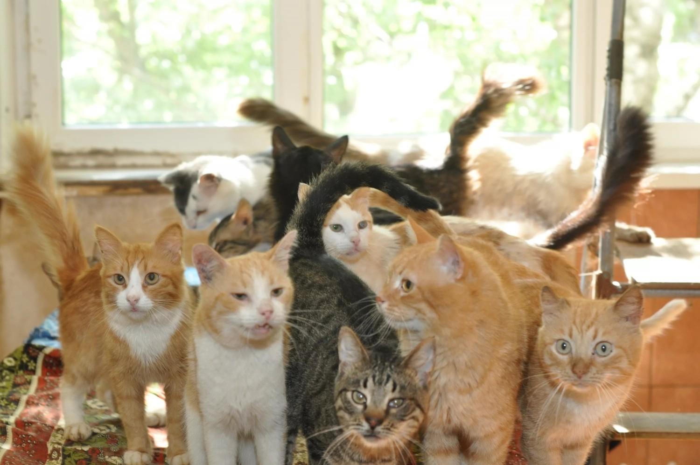 Жительница Оренбурга хранила вквартире 25 мертвых кошек