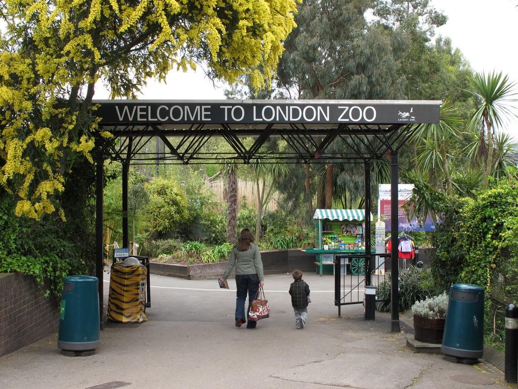 Зоопарк Лондона закрыт из-за пожара