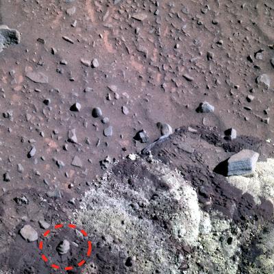 Старинная ракушка найдена учеными наМарсе