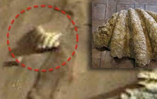 Старинная ракушка найдена наМарсе независимыми знатоками