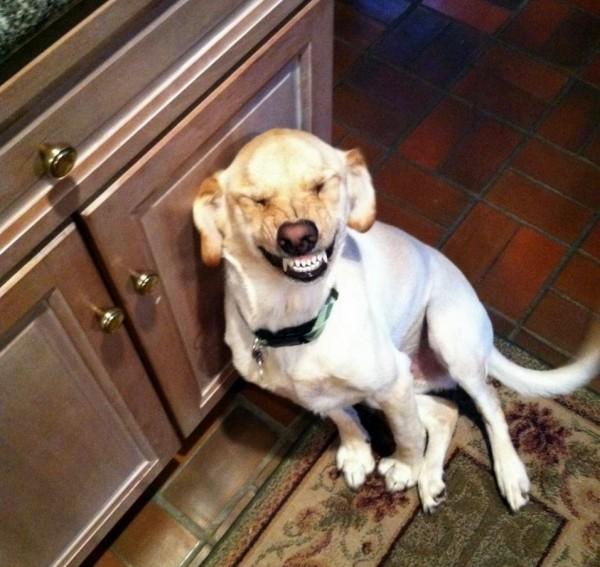 Ученые: Установлено, как собаки реагируют на улыбку людей