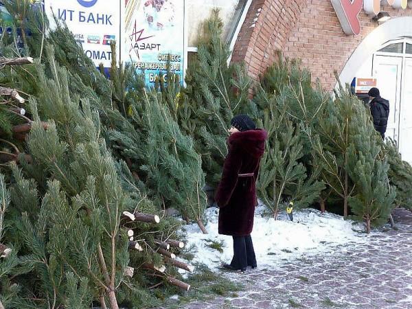 В Омске продают новогодние елки с лесными паразитами