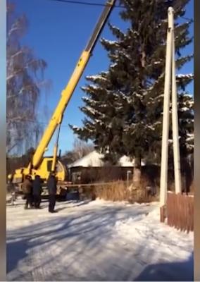 В Челябинске чиновники спилили ёлку местной жительницы для главной площади