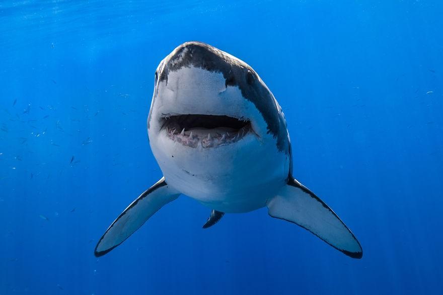 Набагамах оператор дрона спас ребенка от четырех акул