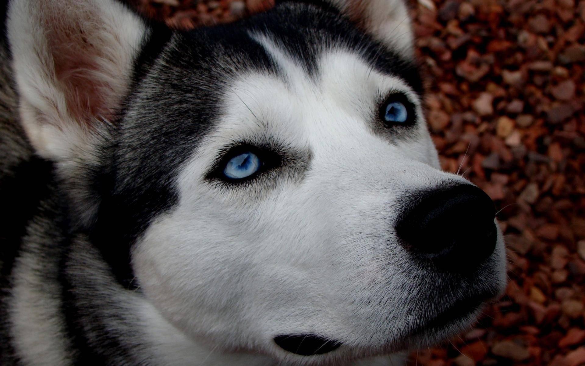 Жительница Советска выбросила изокна 3-х собак