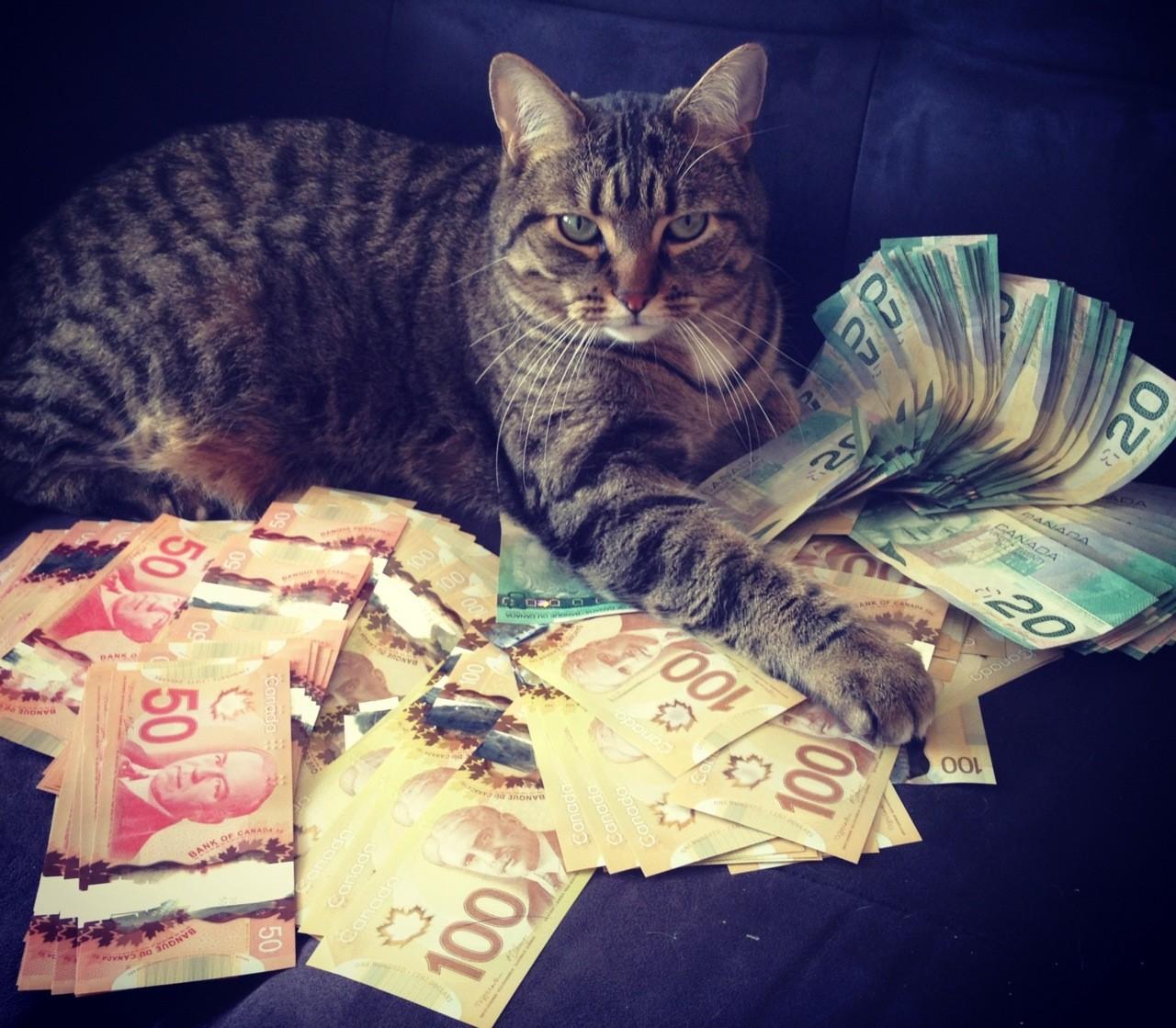 ВИталии кот получил внаследство 30 000 евро