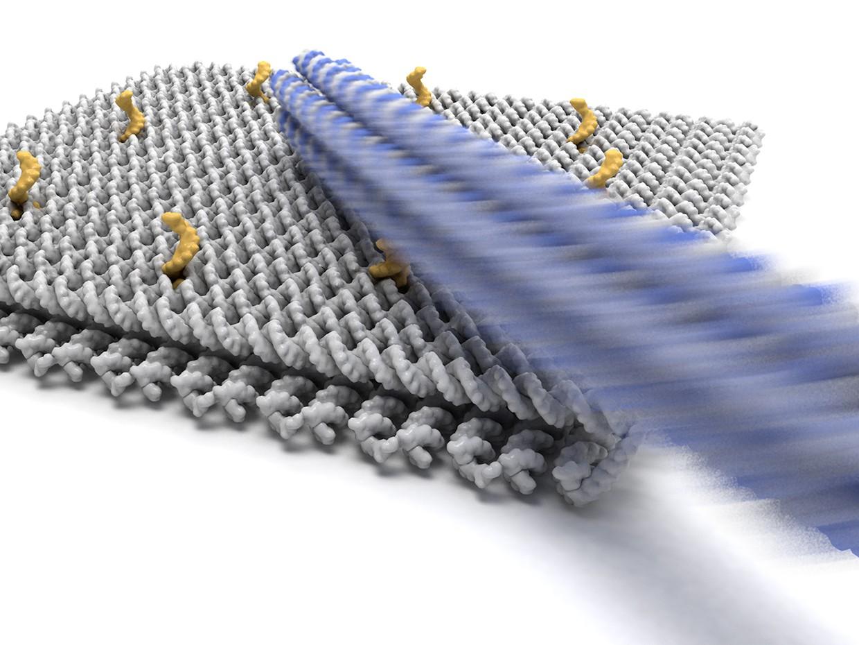Германские ученые разработали молекулярную руку изДНК