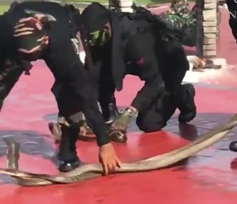 Индонезийские коммандос показали главе Пентагона навыки вманипуляции змеями