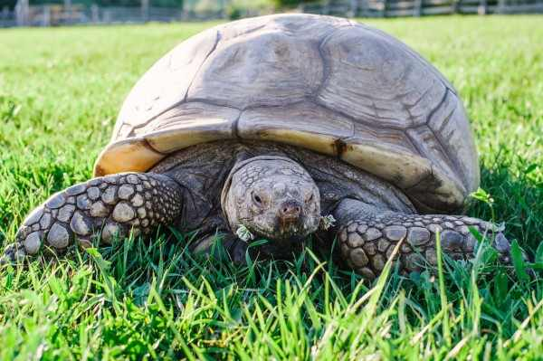 В США американец на полгода сел в тюрьму из-за черепахи