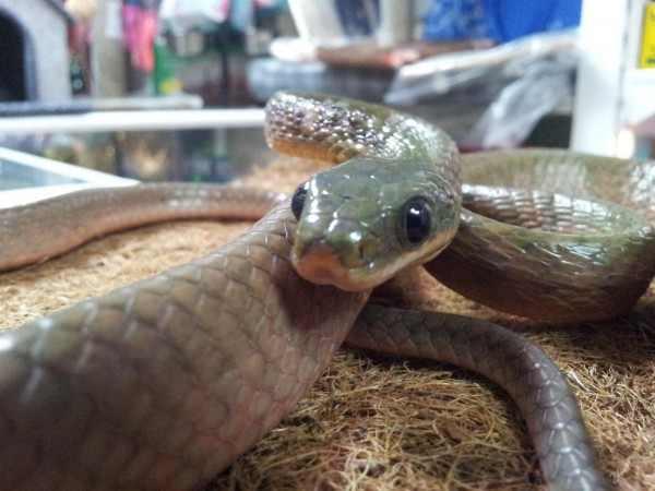 В Австралии из-за змеи семья поверила в призраков