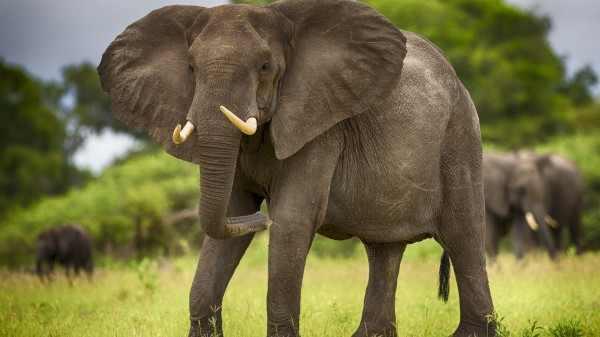 В Ботсване слон напал на туристов