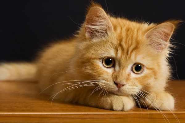Жителя Владимира осудили за избиение кошки