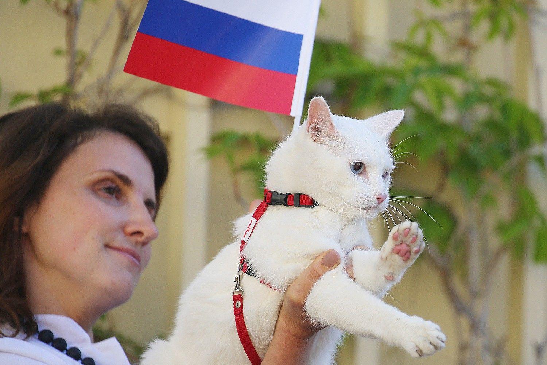 Эрмитажный глухой кот Ахилл предскажет результатыЧМ