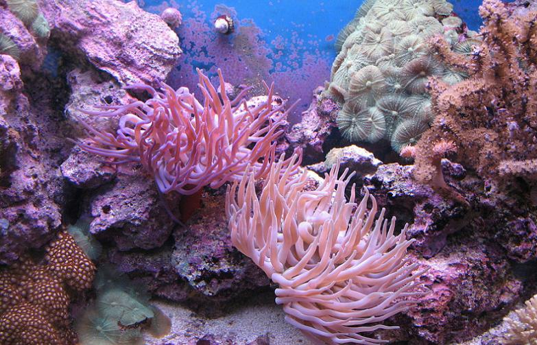 Россиянке угрожает тюремный срок засбор кораллов наПхукете