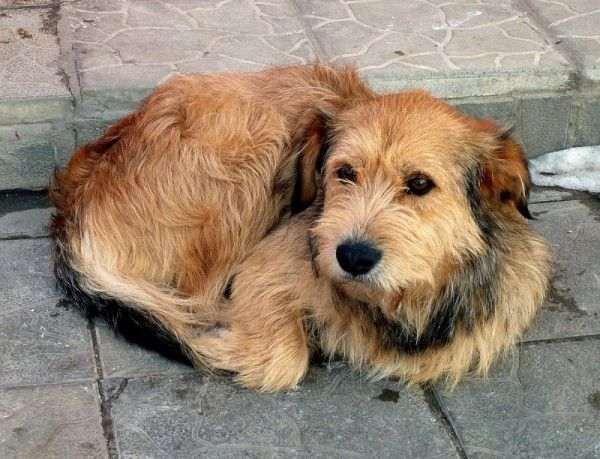 В Луговом на земле лежат окровавленные трупы собак