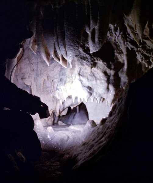 Ученые: В Ботовской пещере найдены останки древних хищников