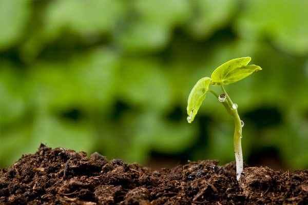 Учёные нашли антибиотики нового типа с помощью бактерий в почве