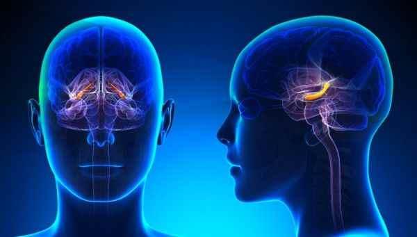 Память зависит от целостности голубого пятна головного мозга