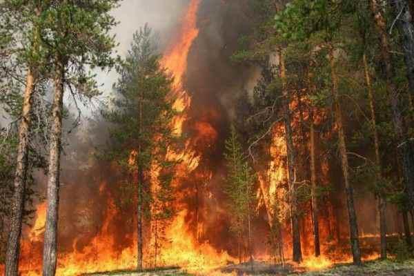 Амазонские леса спасать бессмысленно из-за пожаров
