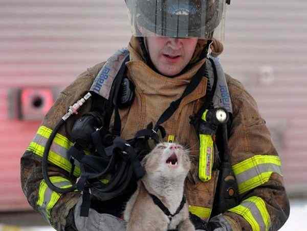 Иркутские пожарные поучаствовали в фотосессии с котами