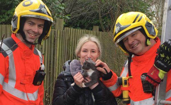 В Британии женщина, спасая котенка, сама застряла на дереве