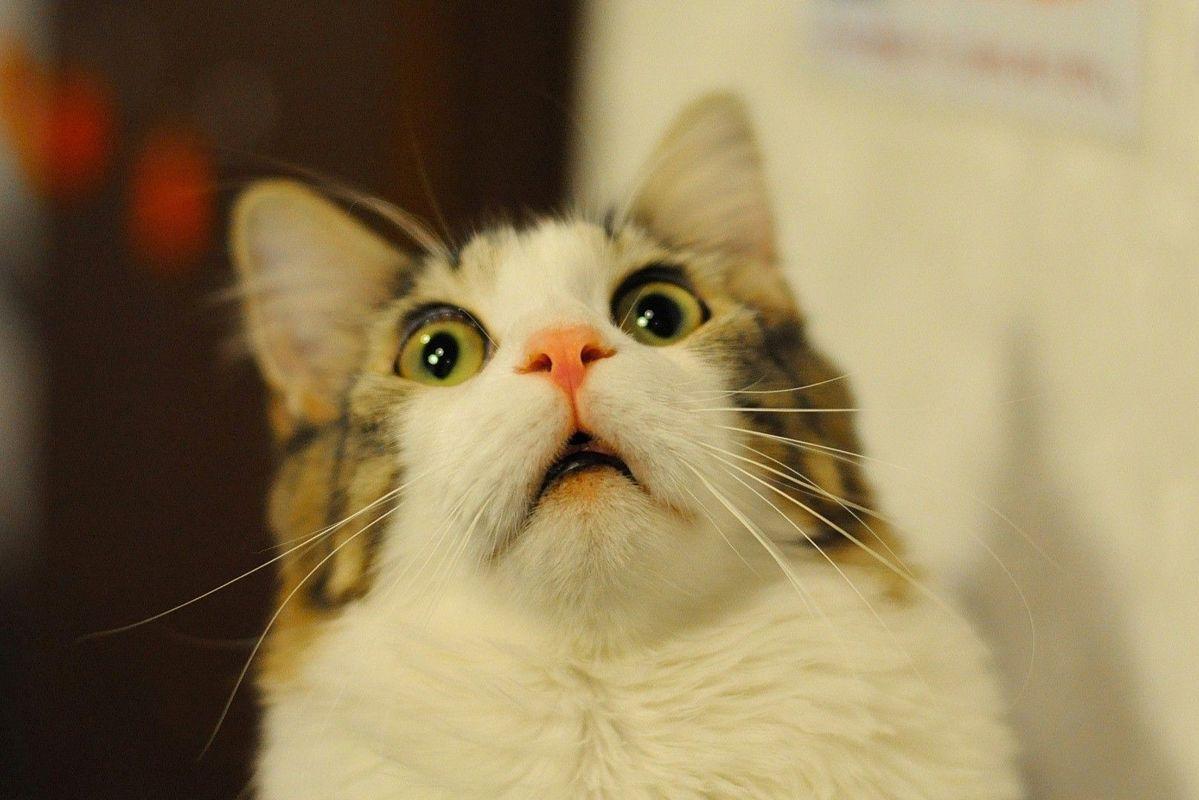 Программист собрал систему распознавания морды своего кота, чтобы тот мог заходить в дом
