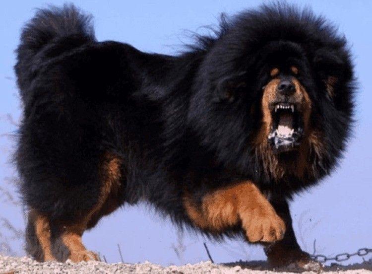 Парень, растерзанный собаками вПодмосковье, совершил героический поступок— Лоза
