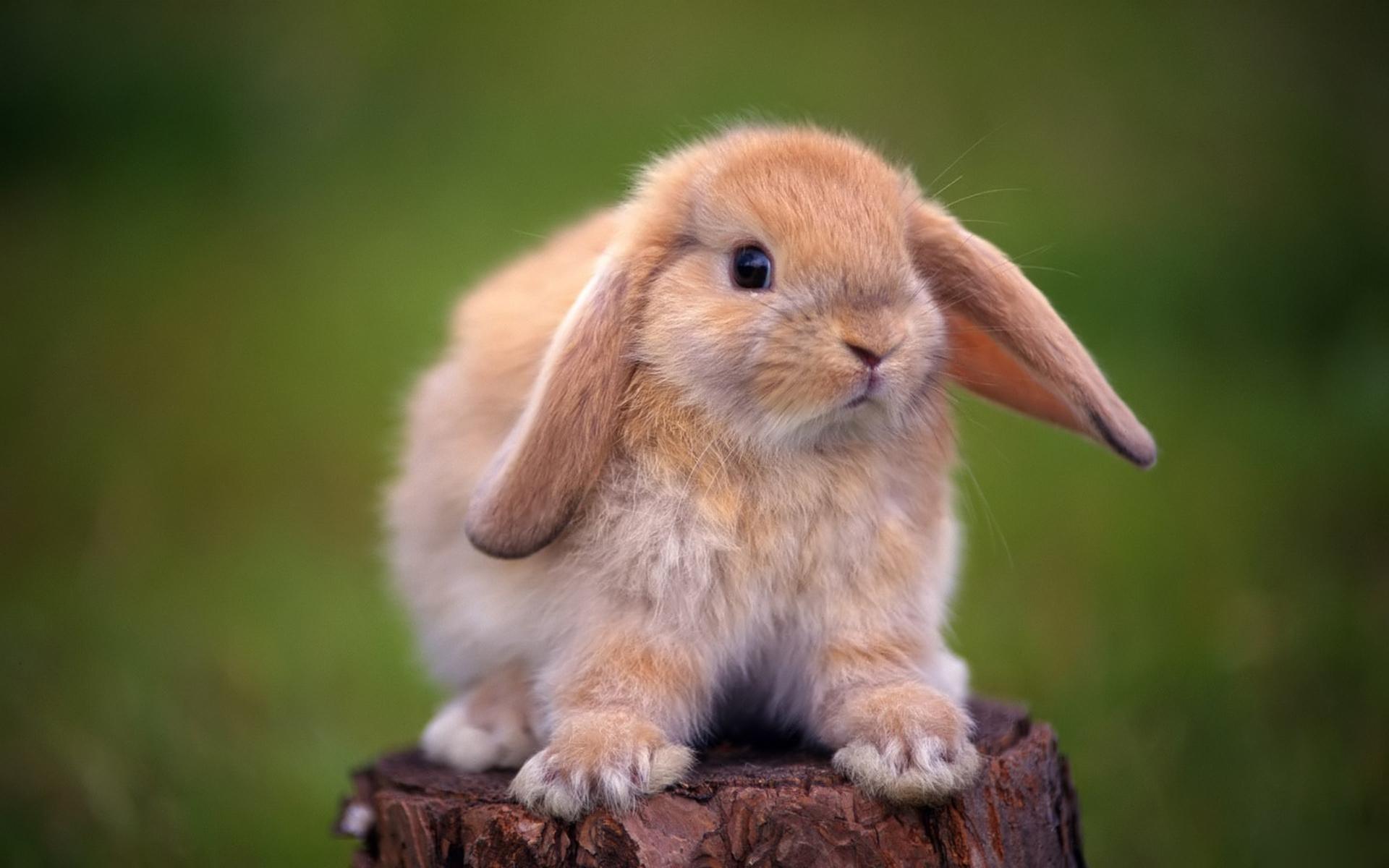ВМоскве кролик напал намаму сребенком уметро «Севастопольская»