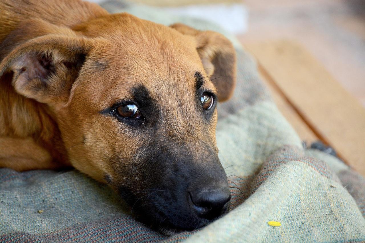 Гражданин посёлка Талалихино стрелял вуличных собак