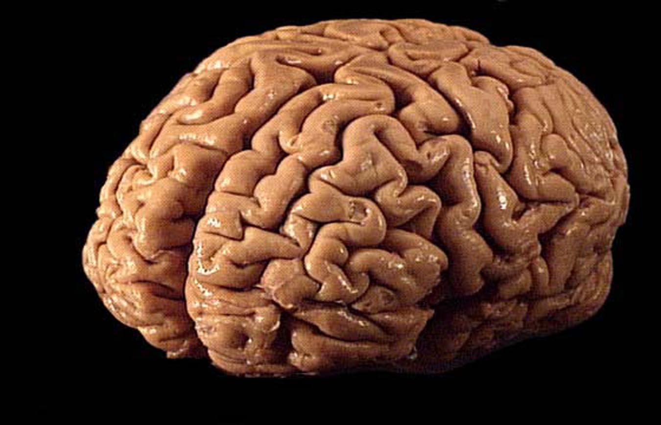 Ученые создали киберчип, который улучшает память человека