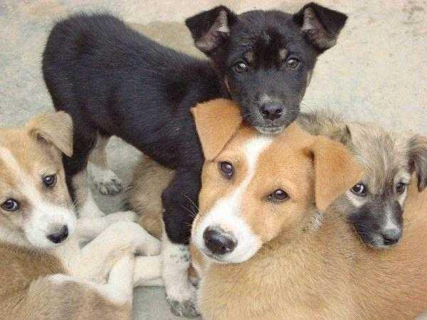 Жители поселка около Сочи нашли ущелье с трупами собак