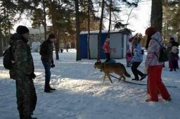 Челябинцы удивились волку, разгуливающему по городскому парку