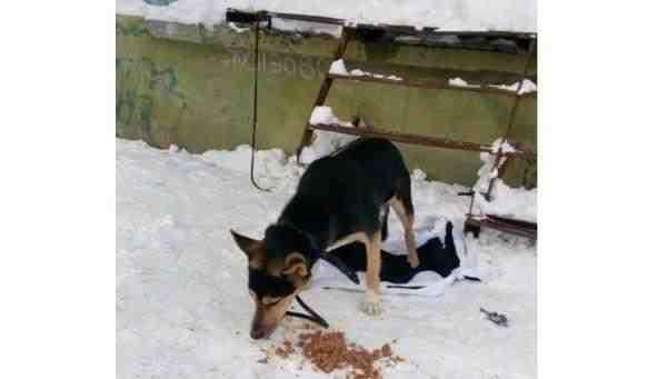 В Мурманске собака второй день ожидает своего хозяина на морозе