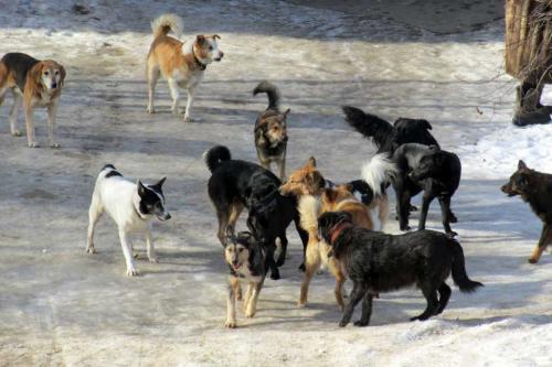 Стая бродячих собак разодрала косулю возле пансионата в Липецкой области