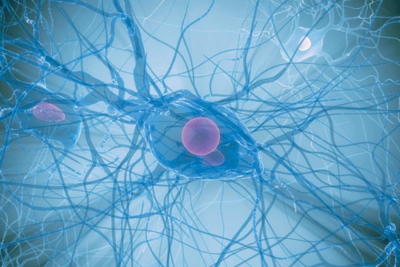 Русские учёные установили воздействие иммунитета наинтеллект ипамять человека