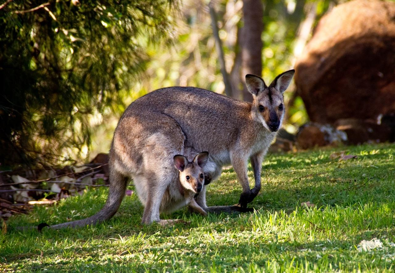 Голодные ростовские дети забили насмерть детёныша кенгуру
