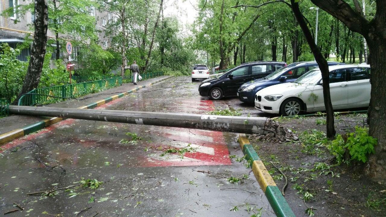Субботний циклон повалил 18 деревьев и сломал 7 крыш— Администрация Рязани