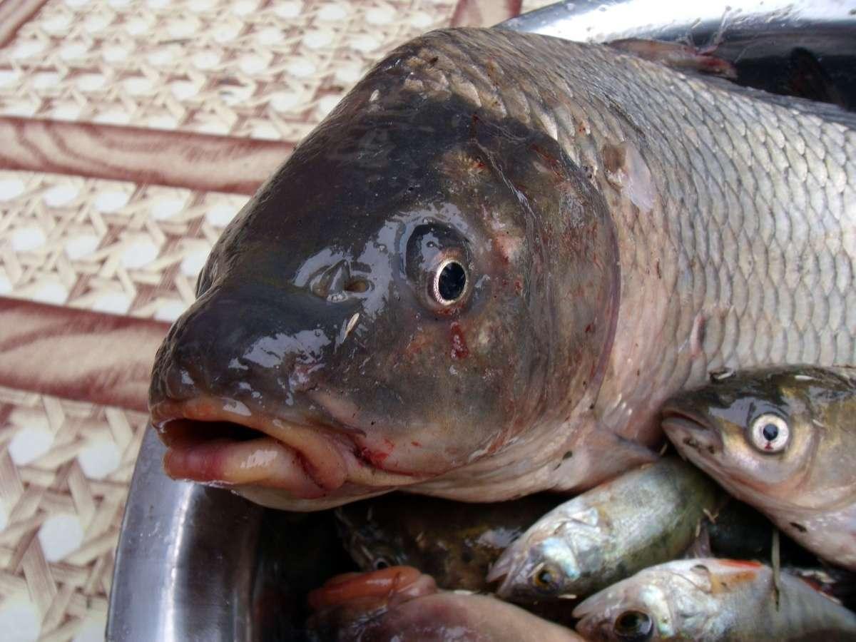 Употребление рыбы понижает риск развития болезни Паркинсона— Ученые