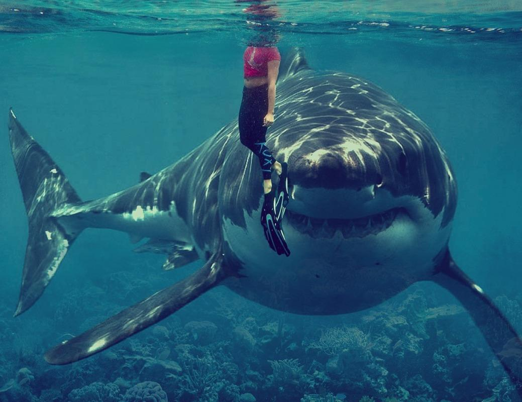Картинки по запросу тупорылая акула