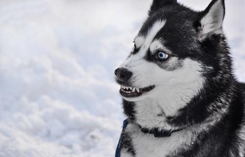 В Карелии стаи бездомных собак нападают на детей