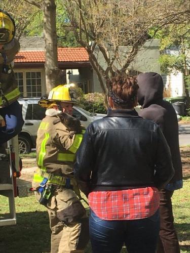 Английские пожарные спасли застрявшего на дереве мужчину, который полез за котом