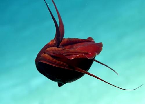 Ученые запечатлели странное неизвестное существо в Мексиканском заливе