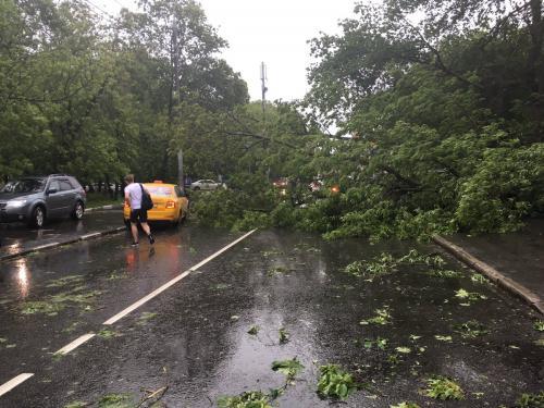 В Москве деревьям выдадут паспорта на устойчивость к ураганам