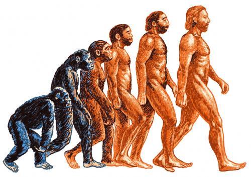 Походка человека сформировалась еще до появления рода Homo