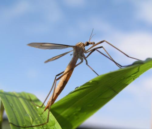 Новороссийск атаковали «малярийные комары»